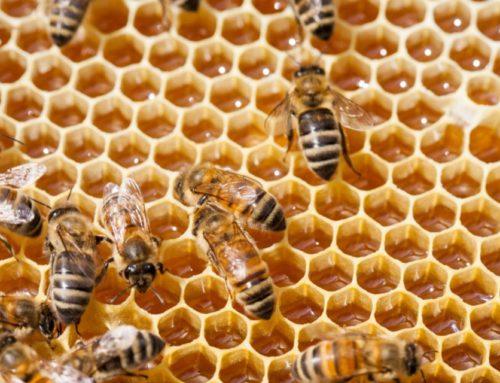 Lazio: finanziamenti all'apicoltura