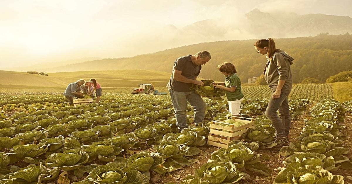 Contributi Imprese Agricole Lazio