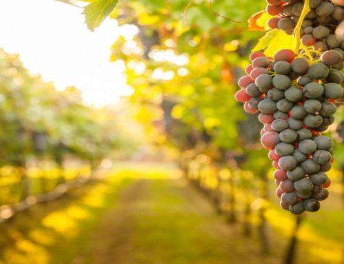 Calabria: incentivi al comparto vitivinicolo