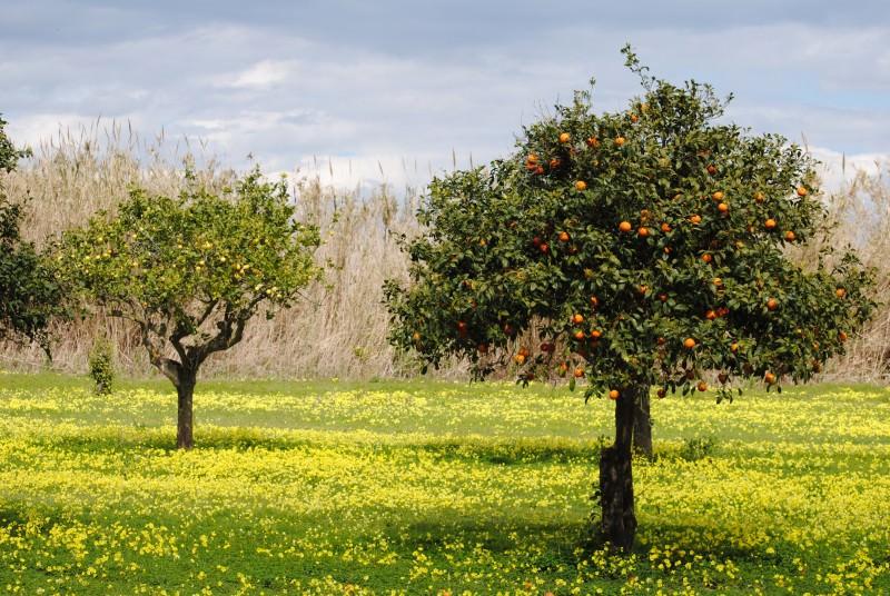 Danni colture in Sicilia